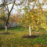 осенняя подкормка в саду