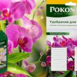 покон для орхидей