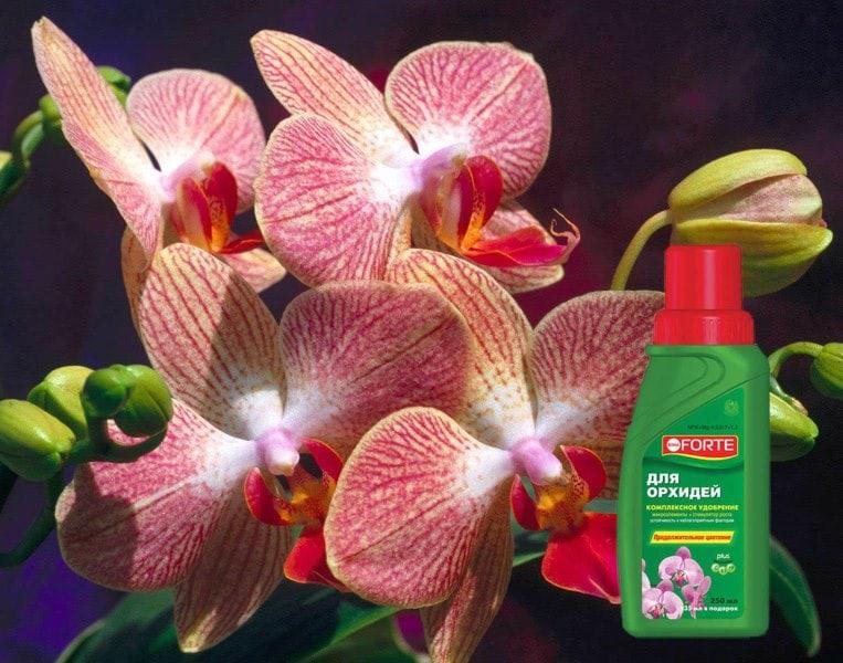 Bona Forte: концентрированное жидкое удобрение и подкормка для орхидей