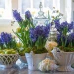 Гиацинт – уход и посадка в домашних условиях