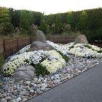 Белые хризантемы в Нью-Йоркском ботаническом саду