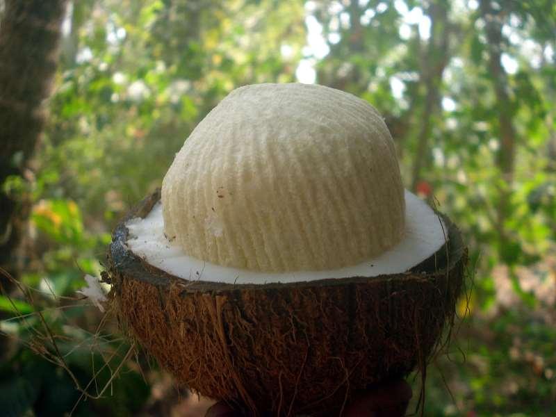 Мякоть кокоса содержит много полезных веществ