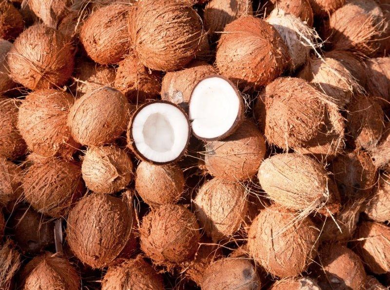 Созревшие кокосовые орехи