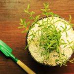 агроперлит для комнатных растений