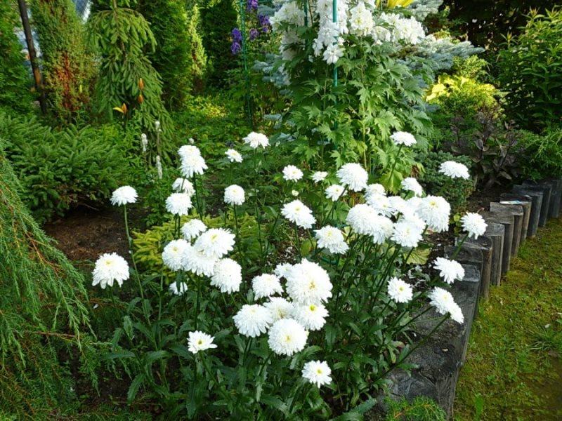 Фиона Гогхилл в саду